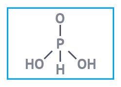 Фосфористая кислота