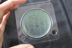 Микробиологический экспресс-тест (подложка) на сальмонеллу «Петритест»